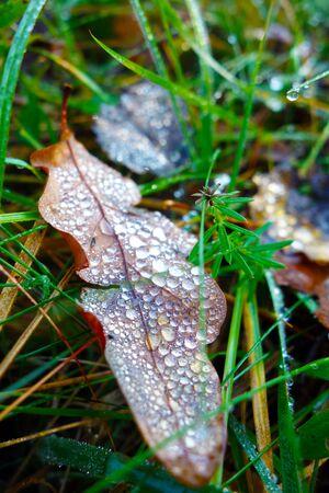 Glittering dew on fallen leaves