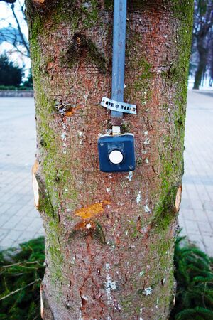 Christmas tree on the square with a button for Christmas music 写真素材
