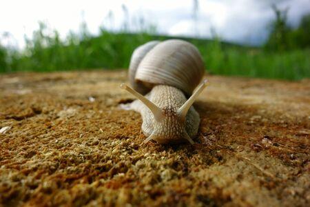 A slimy snail crawls on a stump Reklamní fotografie