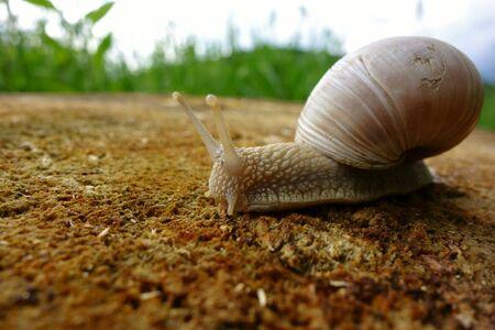 A slimy snail crawls on a stump