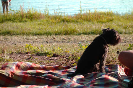 The dog sits on a blanket next to its owner and watches the surroundings of the summer resort