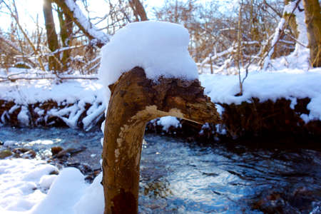 Beautiful snowy nature with stream, to the fore is snowy tree in the form camel bird