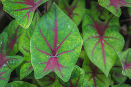 bisected: green leaf macro texture with lines bisected magenta. Stock Photo