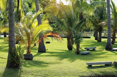 marble seat for relaxation in garden,coconut tree on lawn in park,peaceful place for relax Banque d'images - 133319226