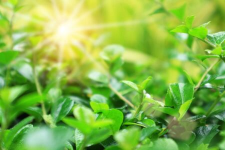 green leaves blurred background,beautiful bokeh effect of nature Stockfoto