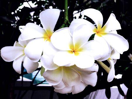 sch�ne blumen: Sch�ne Blumen