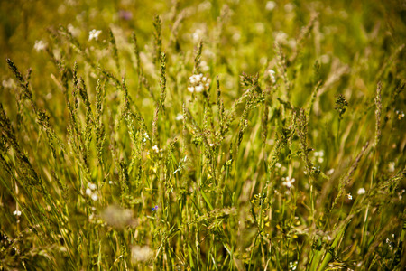herbage: Herbage background, shallow depth of field
