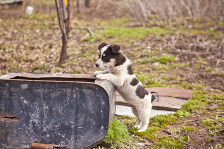 degradation: puppy dog standing on his hind legs, shallow depth of field