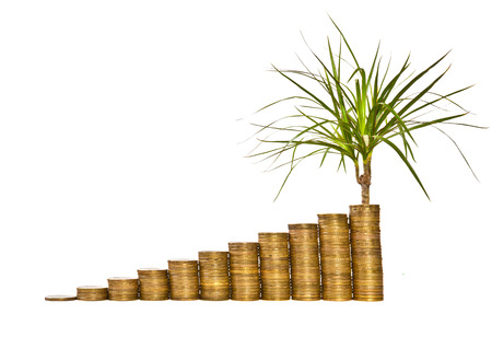 contributions: Money growth concept on a white background