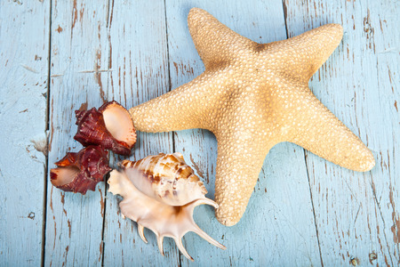 starfish and shells on the wooden background Stock Photo
