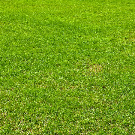 Fondo de hierba verde Foto de archivo - 36125690