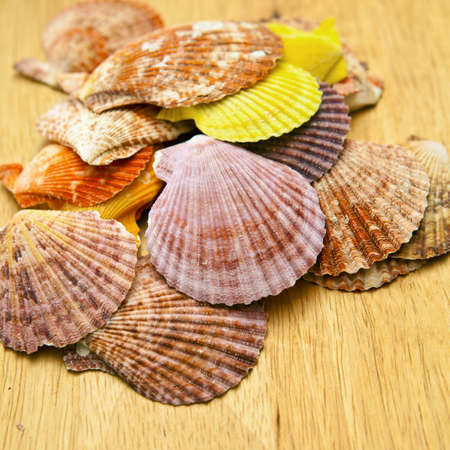 crazing: Sea shells on the board Stock Photo