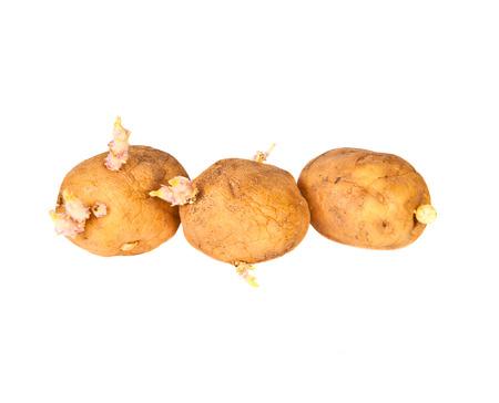 Potato sprouts on a white background