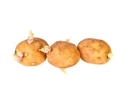 Potato sprouts on a white background