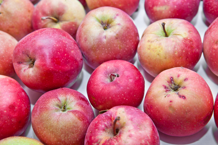 harvest background: apple harvest background