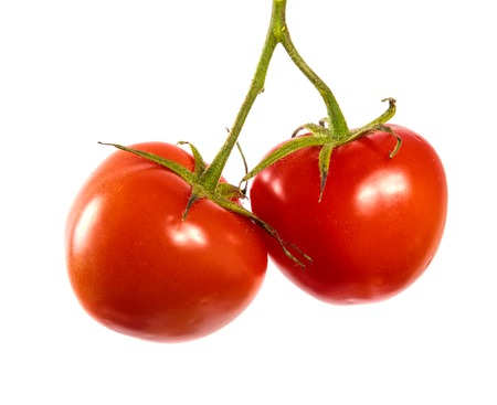 ripe red tomatoes on a branch. white background