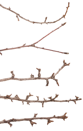 dry thin branches of the tree. isolated on white. Set