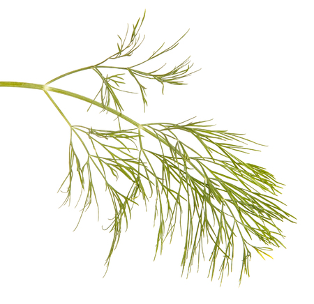 A branch of green dill. Isolated on white