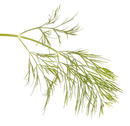 Una rama de eneldo verde. Aislado en blanco