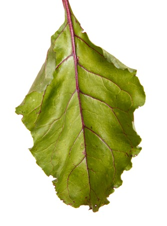 Green leaves of sugar beet. Isolated on white