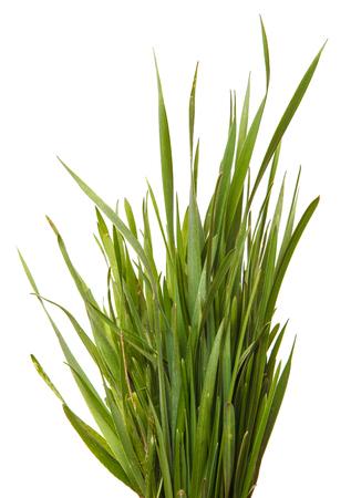 Pęczek zielonej trawy. Na białym tle