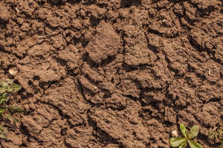 Dry cracked soil.