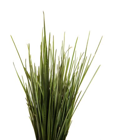 bunch of green leaves of grass. isolated on white background