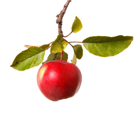 ripe apple on a branch. Isolated on white background. Large set Foto de archivo - 166305222