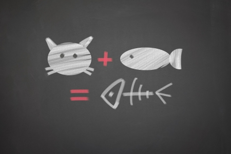 Blackboard with a picture of a cat and fish equation