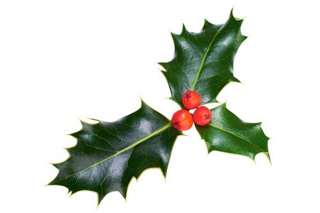 Ein Zweig Weihnachten Holly auf einem weißen Hintergrund