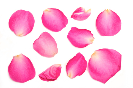 A collection of pink rose petals on a white background.