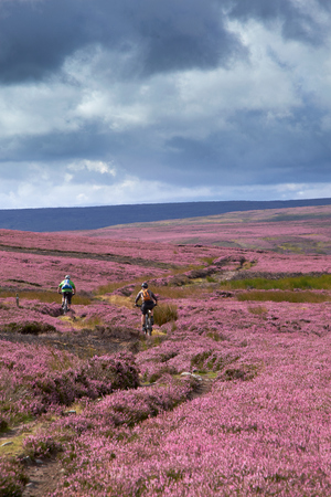 moors: Riding mountain bikes over remote English Countryside in the summer, Blanchland moors,Northumberland, North East England.
