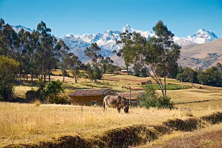 third world: A donkey at a rural settlement with the summit of Huantsan in the Peruvian Andes.