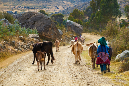 Andean family taking their live stock to grazing pastures in the Andes, Peru, South America Stockfoto