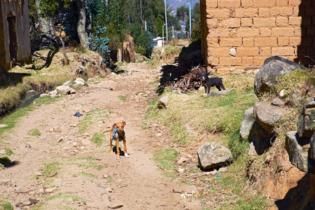 away from it all: Small dogs guarding a rural settlement in the Peruvian Andes, South America. Stock Photo