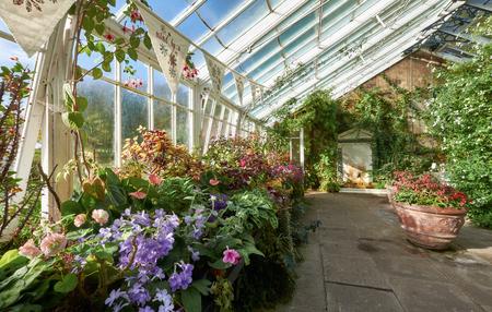Planten in een serre, groene huis aan Wallington House Gardens in het Noord-Oost Engeland, Verenigd Koninkrijk. Stockfoto