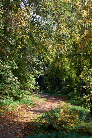 woodlands: A winding trail through English woodlands in summer.