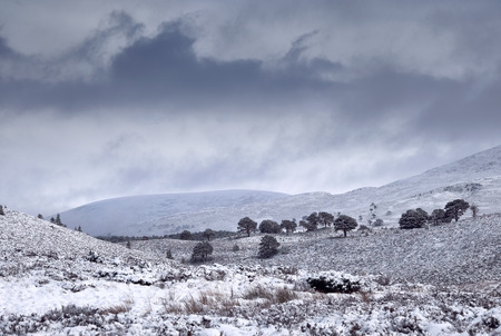 pinus sylvestris: Storm clouds over snow covered Glenmore Forest Park, Cairngorms in the Scottish Highlands, UK.