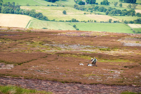 moors: Hunting dogs on the moors in the English Countryside.