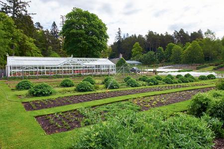 regando plantas: Aspersores de riego de las plantas en el huerto.