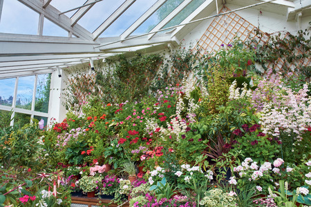 conservatory: Conservatory with a large display of flowers at the Balmoral Castle Estate. Scottish Highlands. UK Editorial
