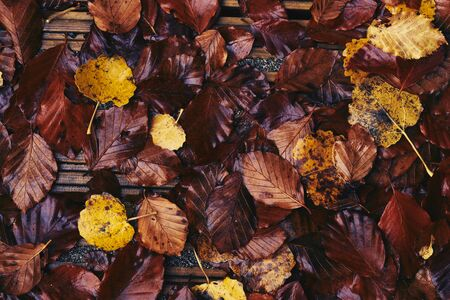 autumn colour: Looking down onto autumn leaves covering a wooden walkway. Colour styling and film grain applied.