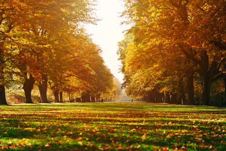 autumn colour: A long tree lined avenue in Autumn. Colour styling and film grain applied.