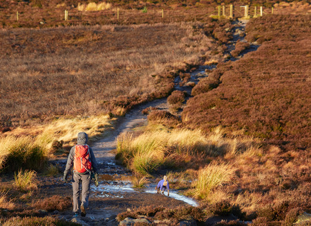 ramble: A hiker and their dog walking in the Northumberland countryside, Simonside near Rothbury, England, UK.