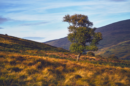 A lone tree on hilly moorland in the English Countryside