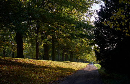 A tree lined avenue and track in the Derwent Valley near Newcastle Upon Tyne, England, UK.