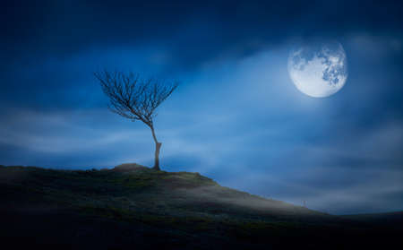 A halloween spooky lone bare branch tree in an isolated moors landscape at night with a full moon and clouds in a blue winter night sky.