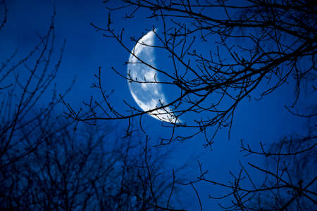 The silhouette of a spooky bare branch halloween tree against a winter blue night sky with a glowing cresent moon and clouds