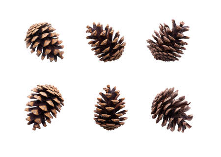 A collection of large pine cone for Christmas tree decoration isolated against a white background. Stockfoto