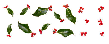 A collection of small smooth holly leaves with red berries for Christmas decoration isolated against a white background.